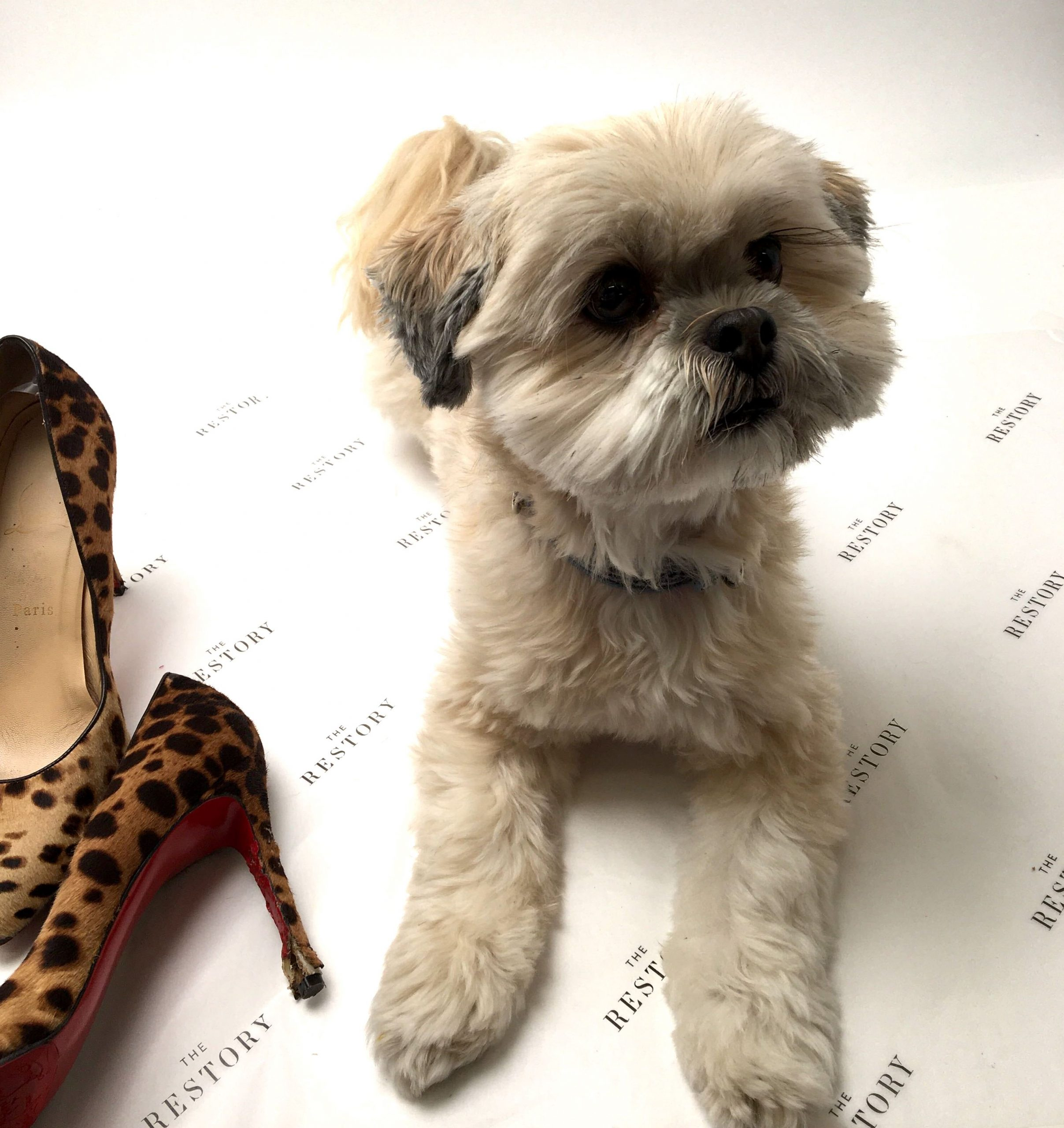 Puppy chewed shoes